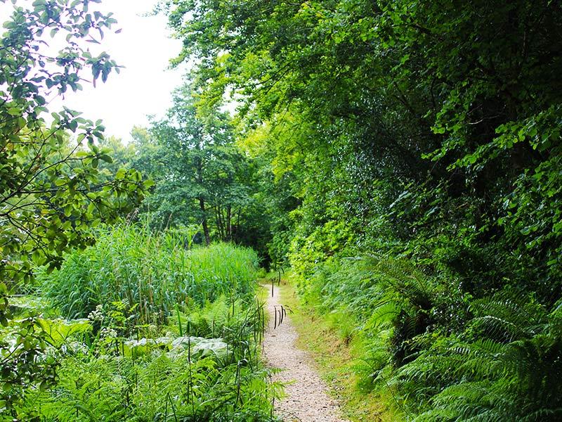 Langarth environment section 01