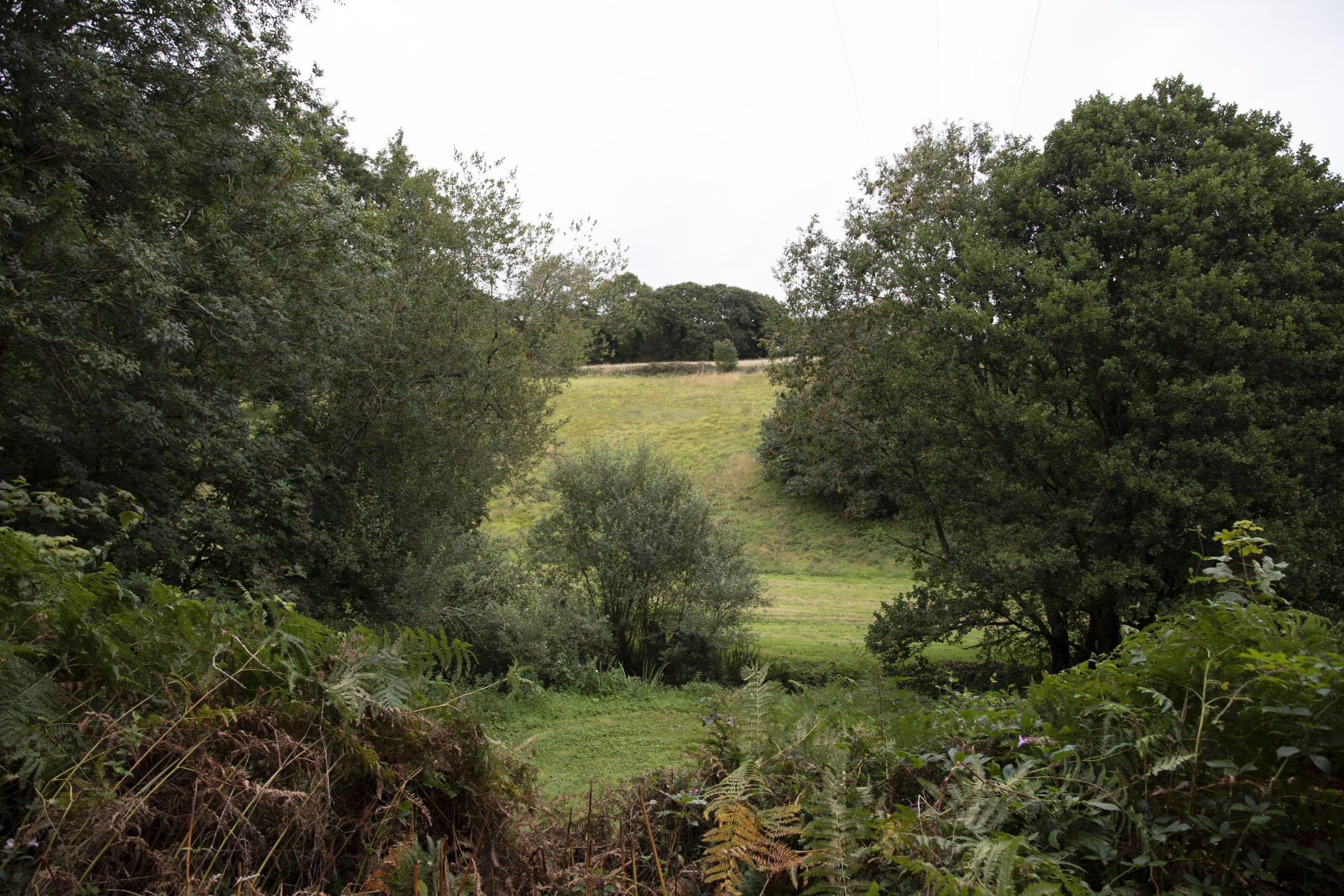 Protecting, enhancing and increasing biodiversity at Langarth Garden Village