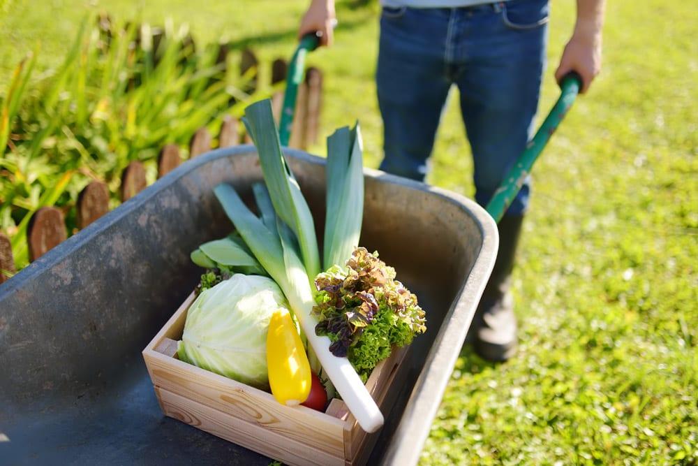 masterplanning a green village blog post 3
