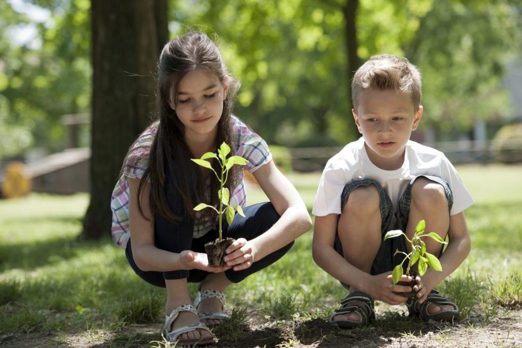 tree planting 1